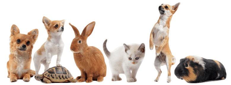 Group of pets_transparent