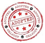 Adopted-Logo-small21