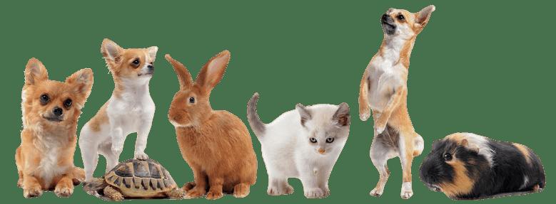 Group of pets_transparent